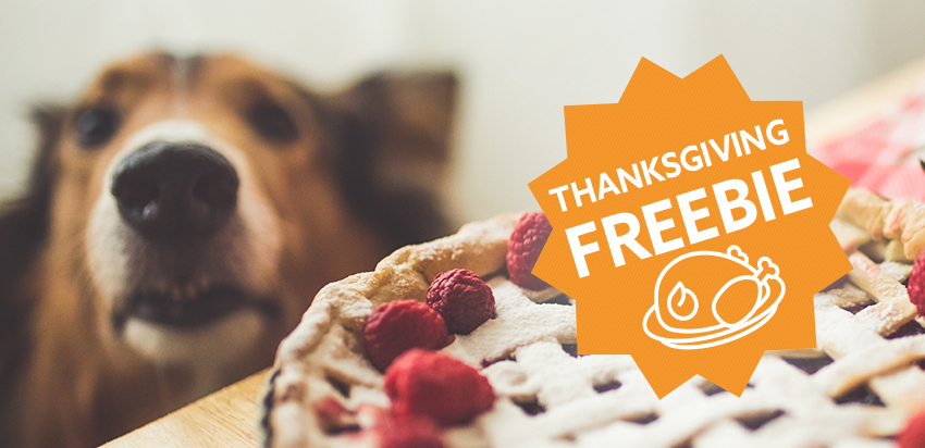 Thanksgiving Foods You Should Never Feed Your Pets